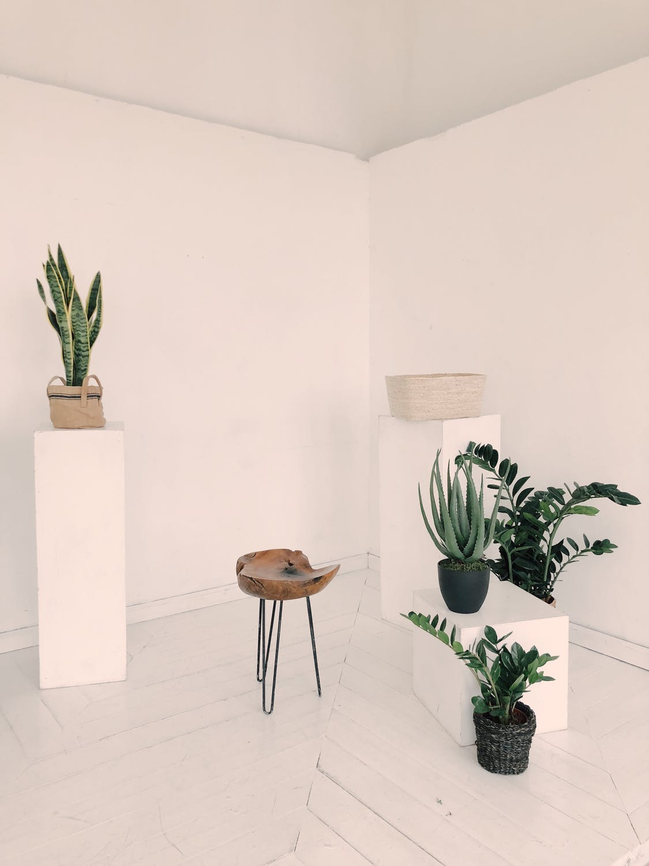 Plants that purifies air